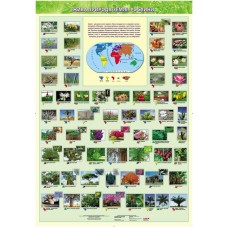 Жива природа землі. Рослини. Навчальний плакат для початкової школи.
