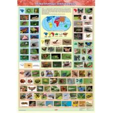 Жива природа землі. Комахи. Навчальний плакат для початкової школи (на картоні)
